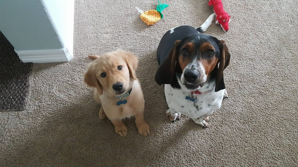 Pawsibilities Dog Training